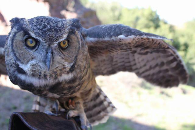 Urban students wrangle raptors at San Franciscos Randall Museum