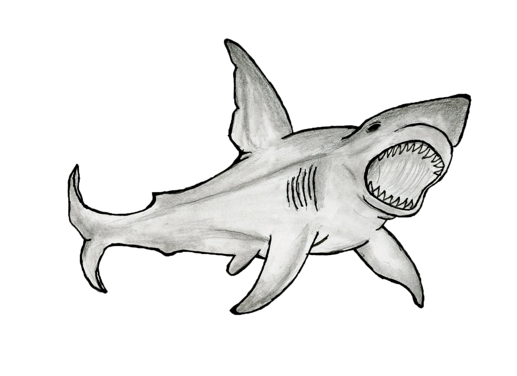New Urban School shark club takes on global issue of shark mistreatment and unsustainable fishing